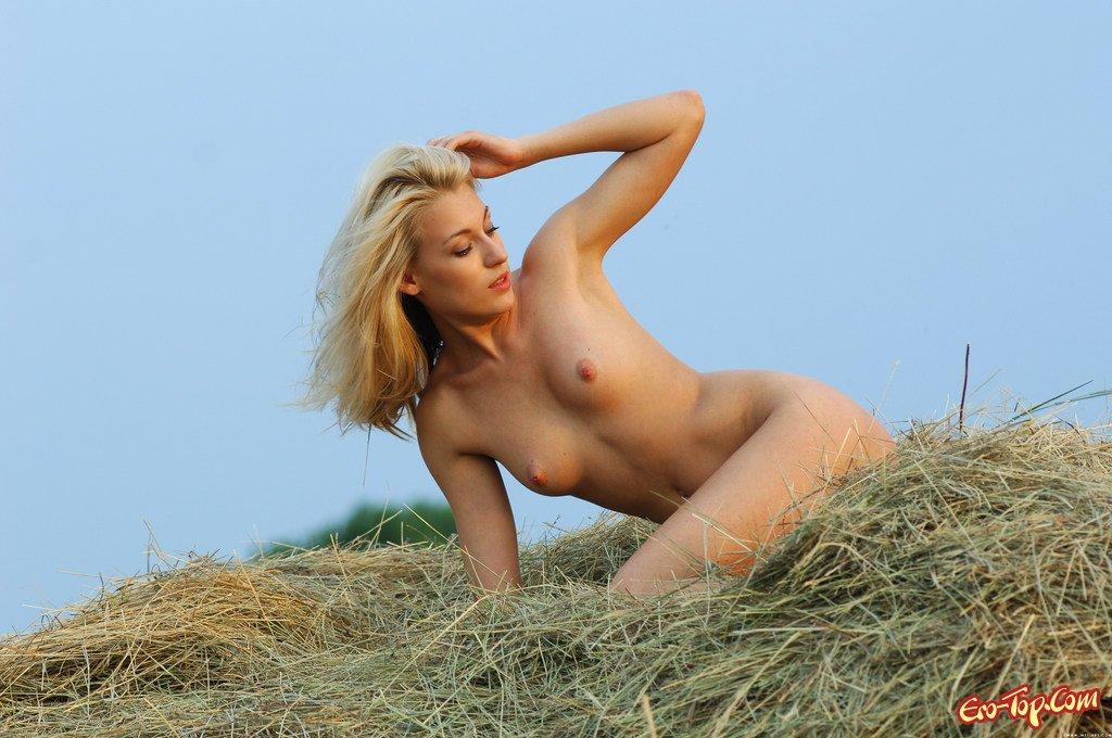 Кобыла в сене