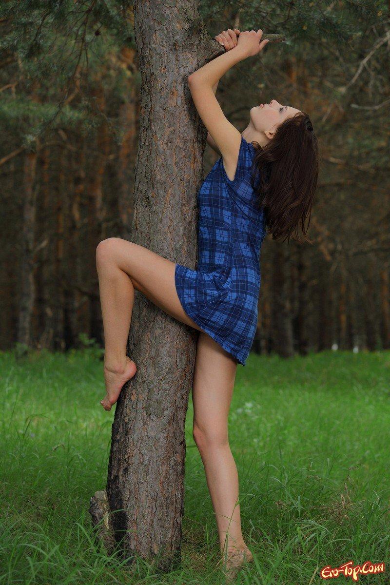 На лесной дороге