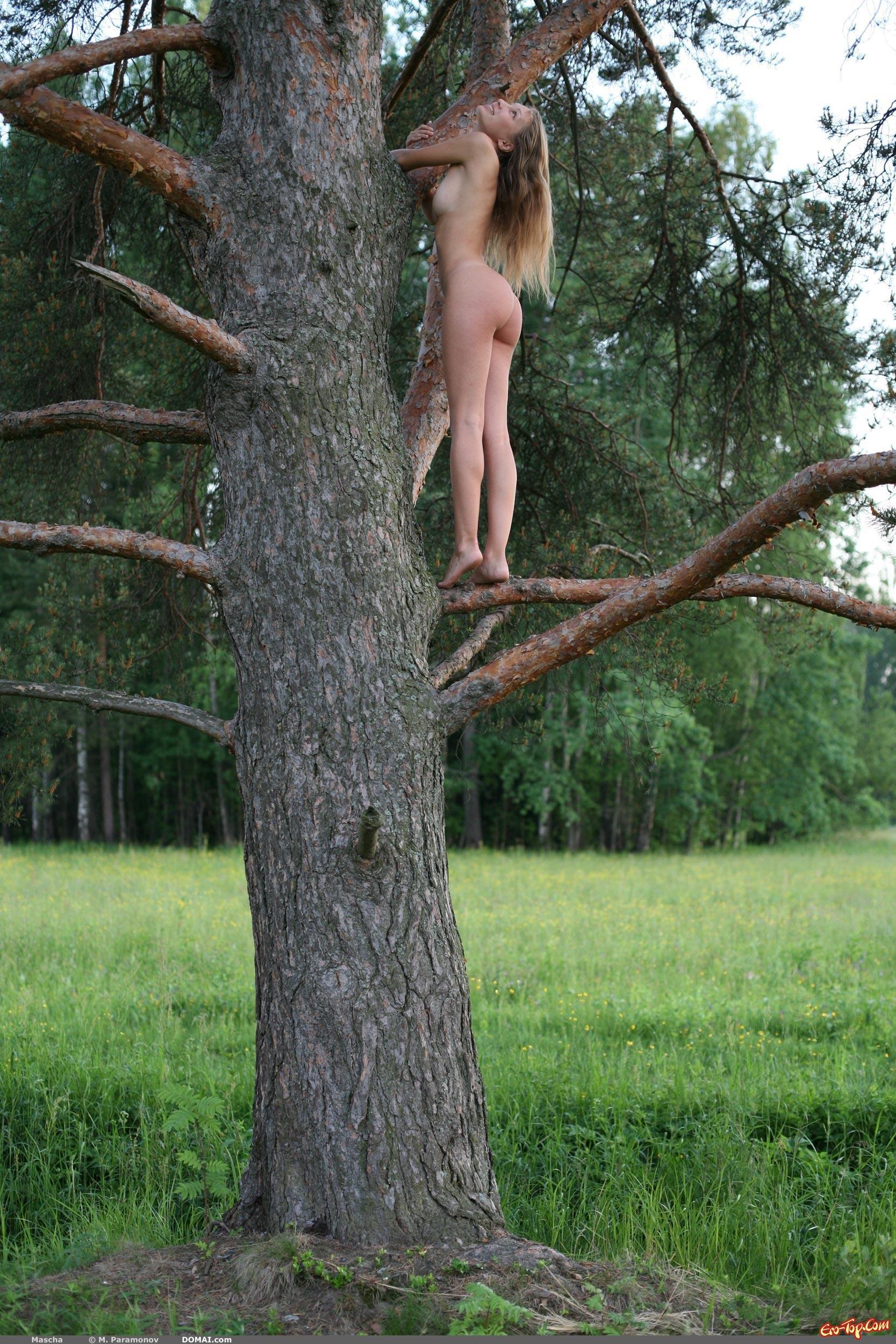Фото голых деревьев 18 фотография